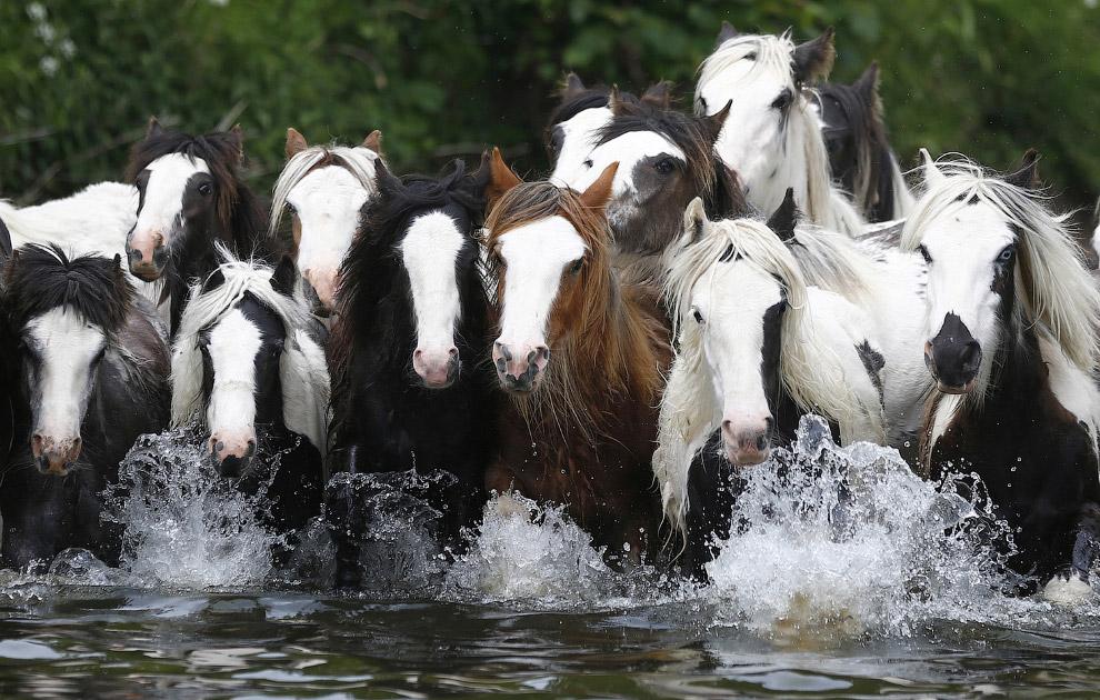 Ярмарка лошадей в Эпплби, Северная Англия