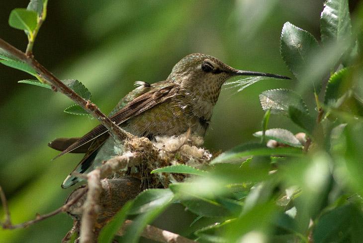 Постройка гнезда