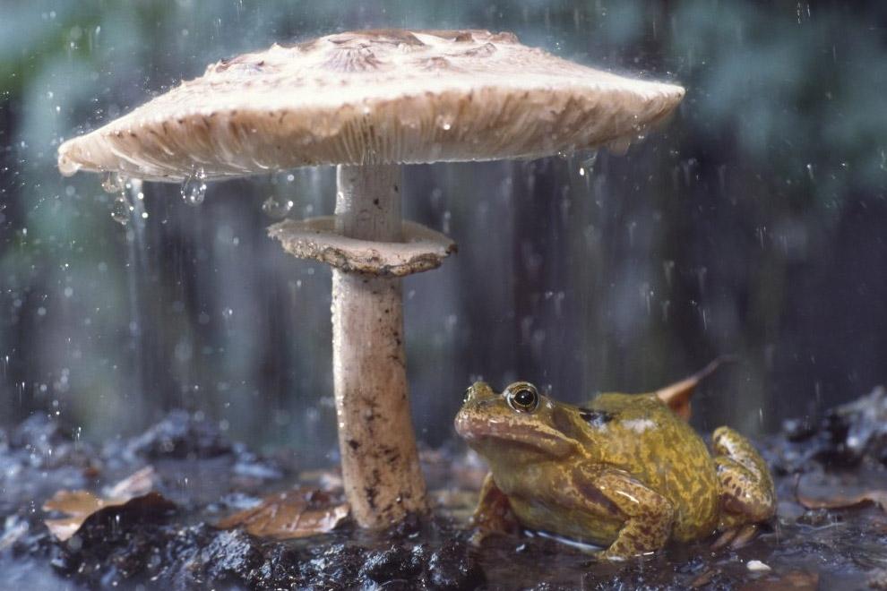Как спрятаться от дождя