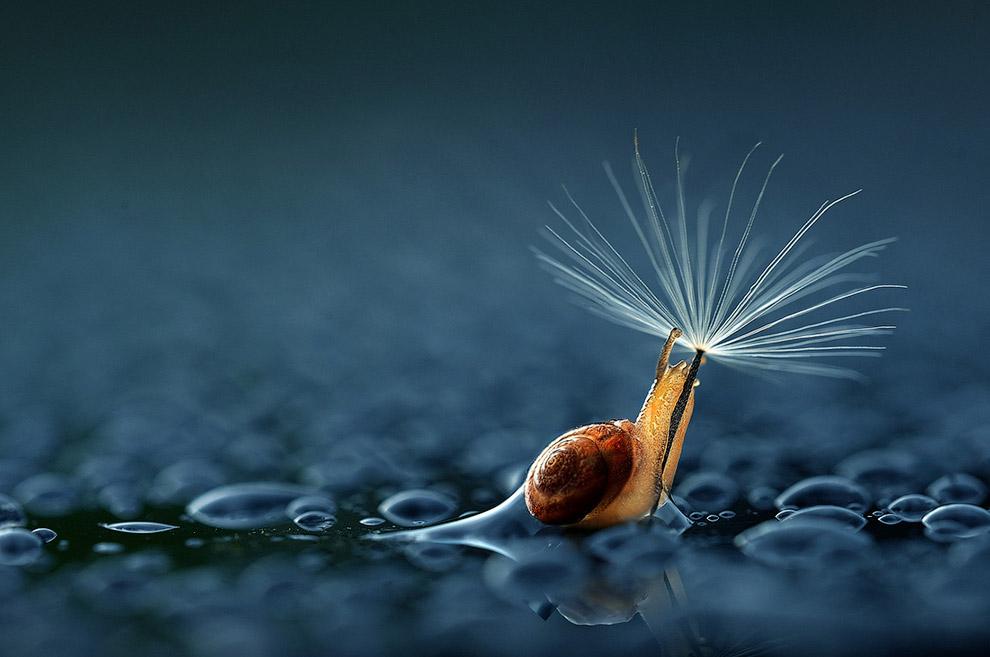 Зонт из одуванчика