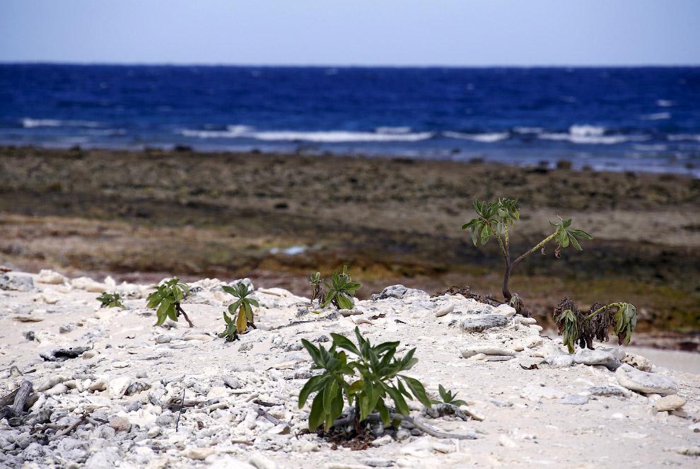 Коралловый пляж на острове Леди-Эллиот