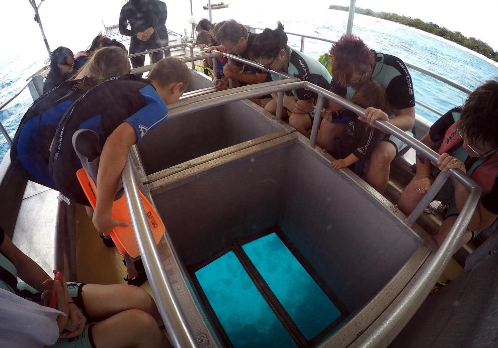 Большой Барьерный риф у острова Леди-Эллиот