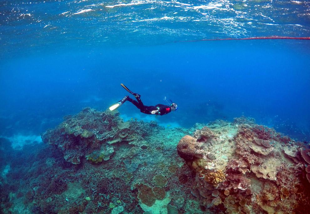 На Большом барьерном рифе обитает около 1 500 видов морских рыб