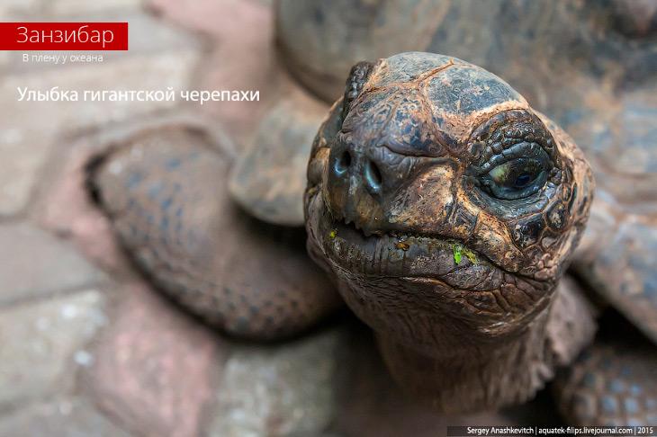 Улыбка гигантской черепахи