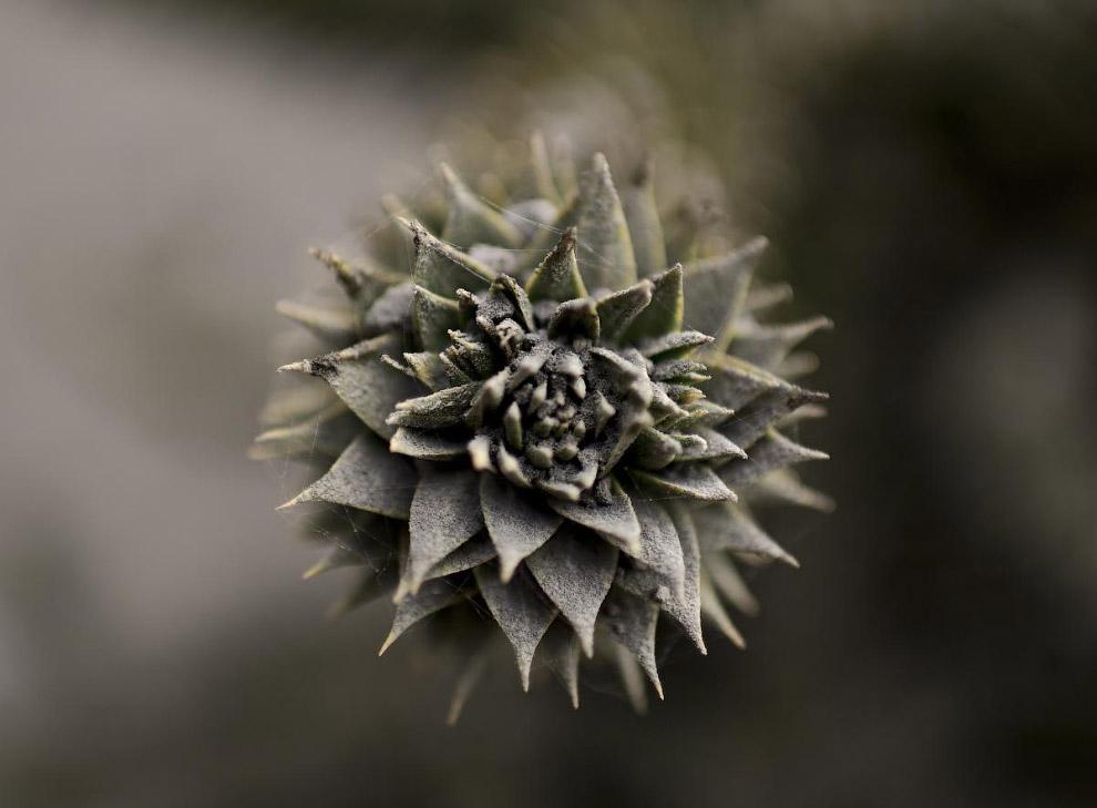 Местная растительность, покрытая пеплом от извержения вулкана Кальбуко в Андах на территории Чили