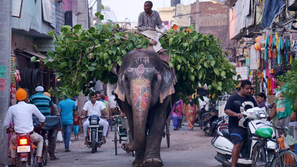 Погонщик со своим слоном на улице в Амритсаре