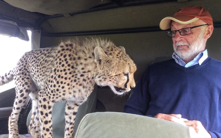 Ирландский турист в шоке, когда молодой гепард во время сафари в Кении запрыгнул к нему в джип