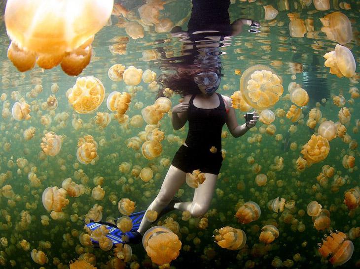 Золотой медузы на озере в Палау