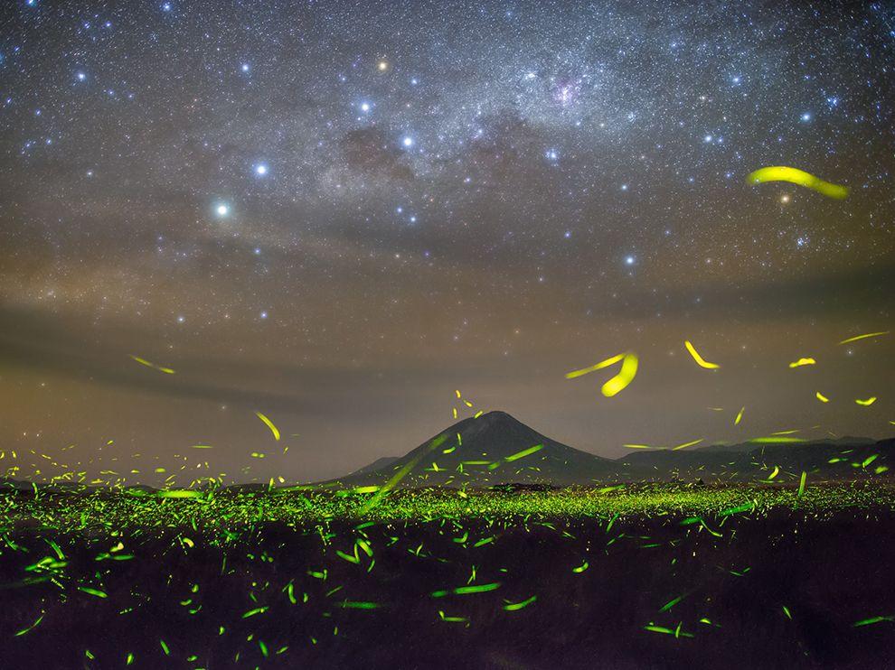 Светлячки и Млечный путь