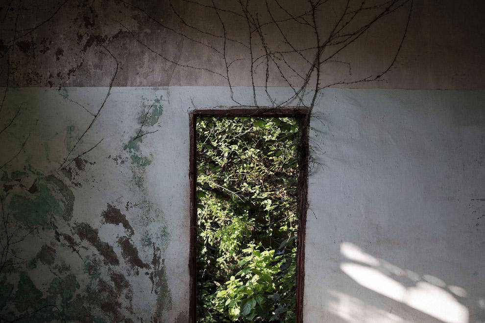 Природа берет свое, и растительность потихоньку пробирается в заброшенные дома