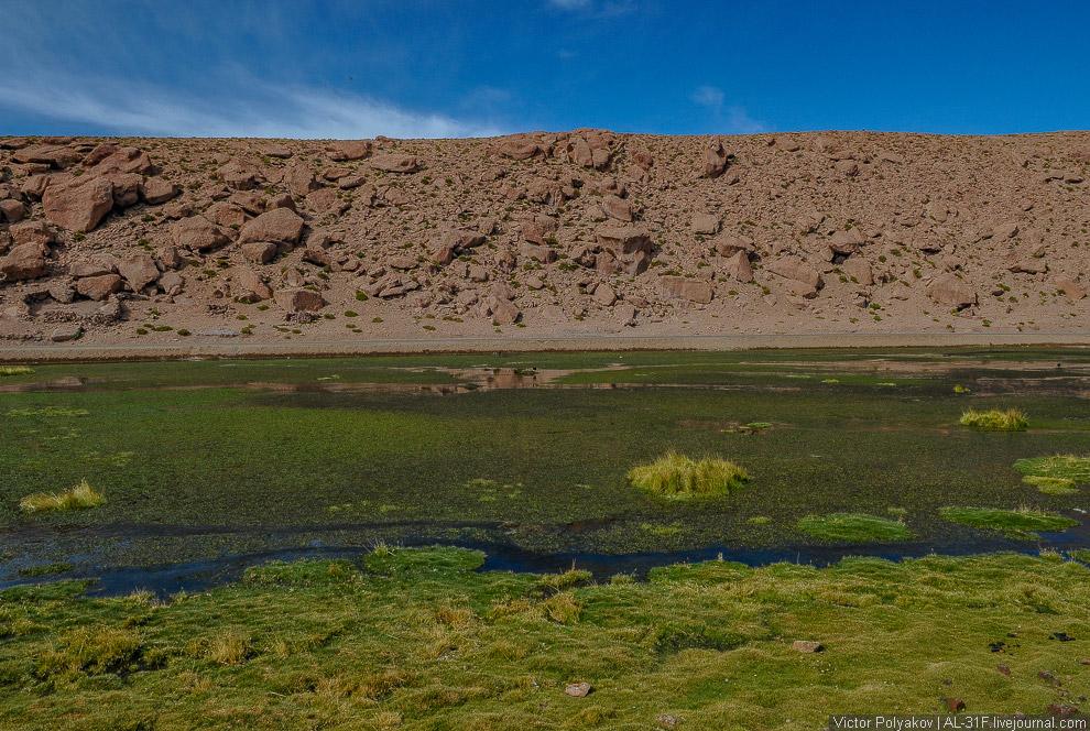 Высокогорное болото