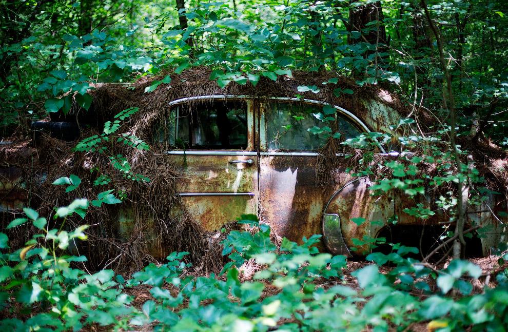 Часть машин почти полностью поглотила природа