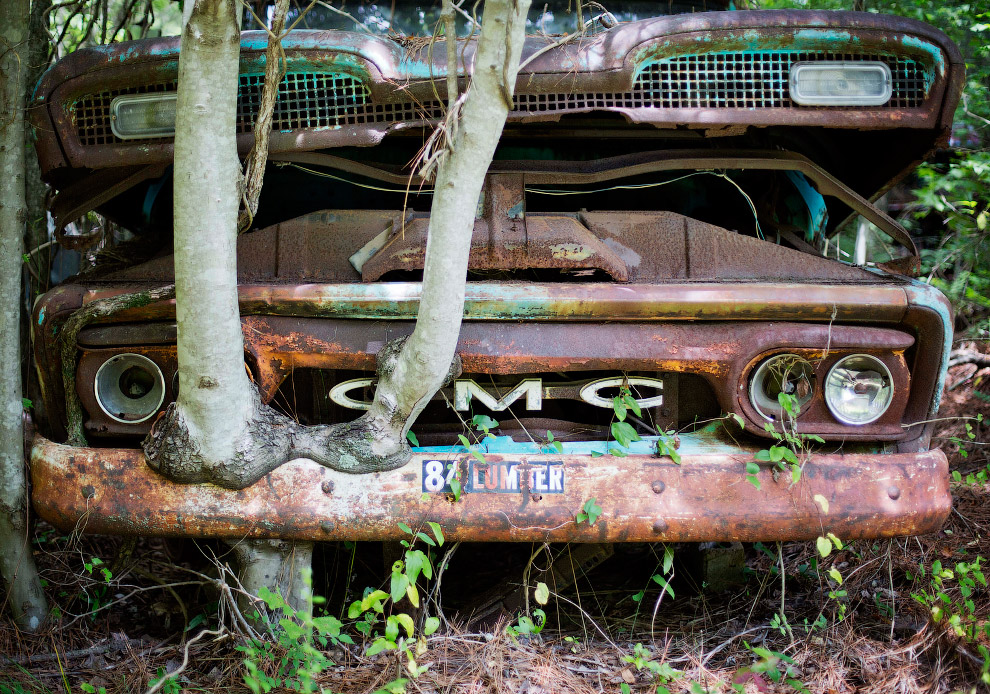 Дерево і американський вантажівка 1953 року