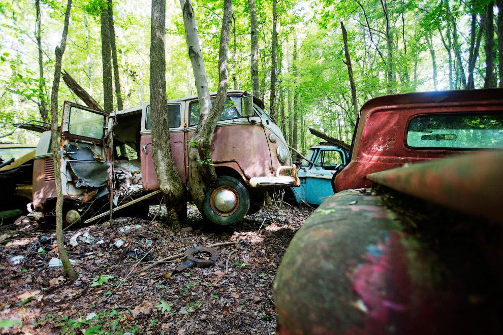 Некоторые деревья пытаются оторвать машины от земли