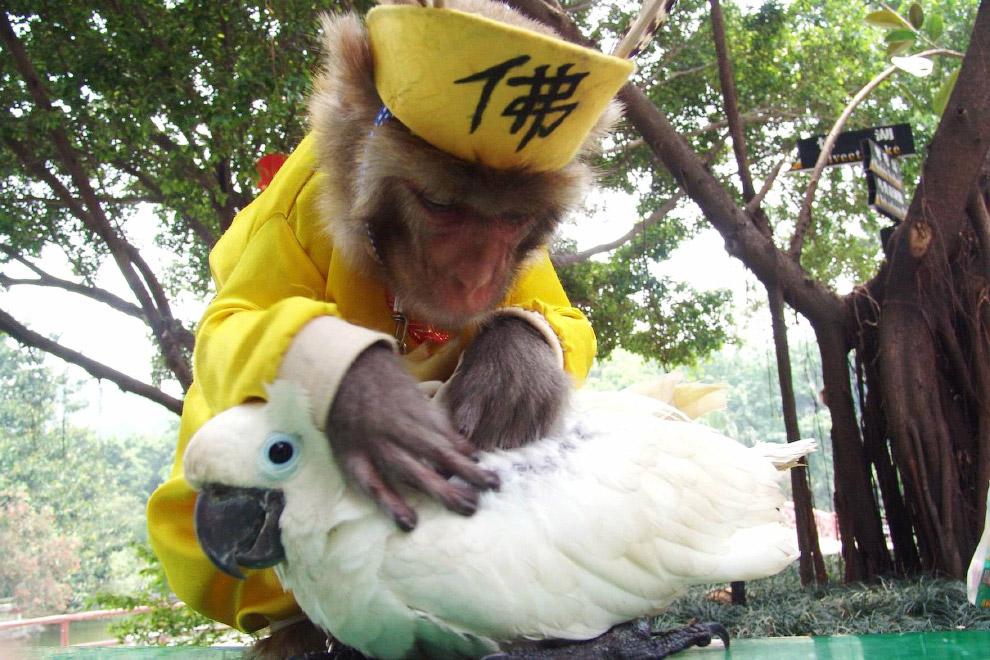 Обезьяна и попугай в парке диких животных в Шэньчжэне