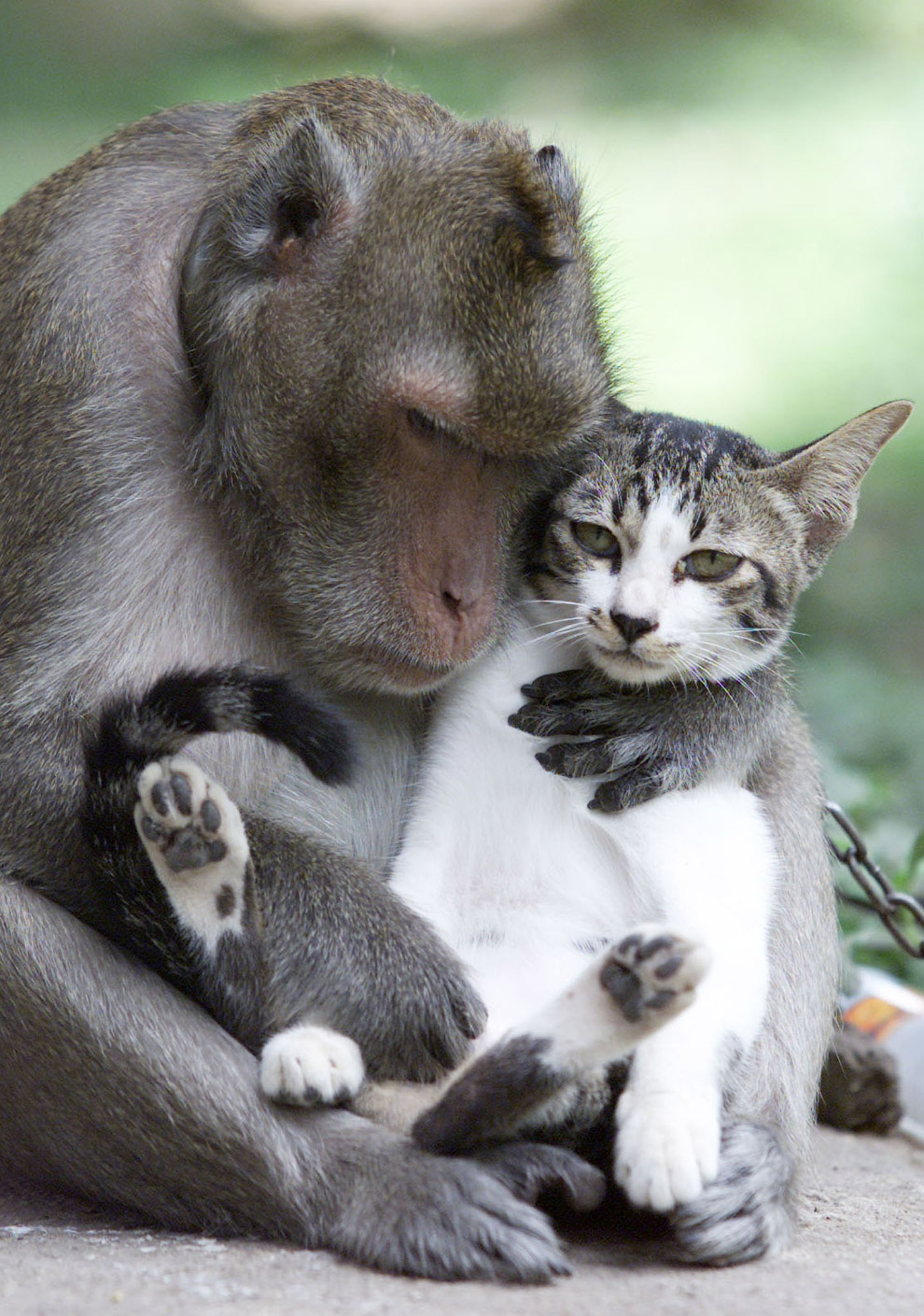 Настоящие друзья, Таиланд