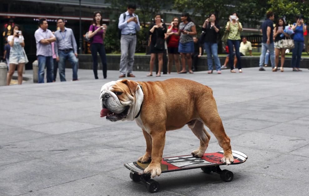 Скейтбордист из Сингапура