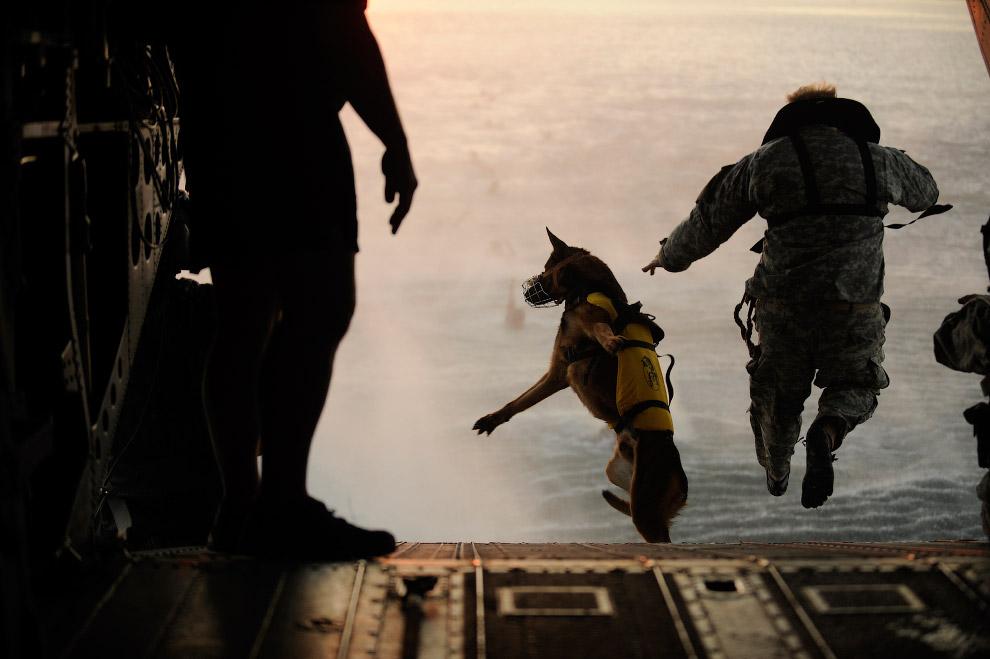 Собака-десантник