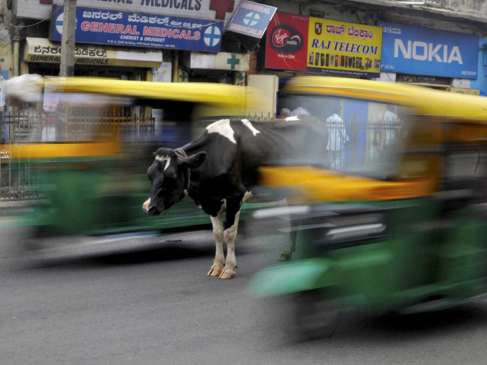 Застывшая корова и рикши в Бангалоре, Индия