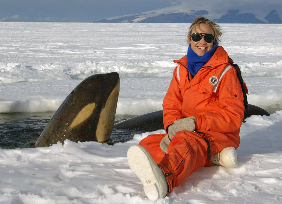 Косатка в Антарктиде