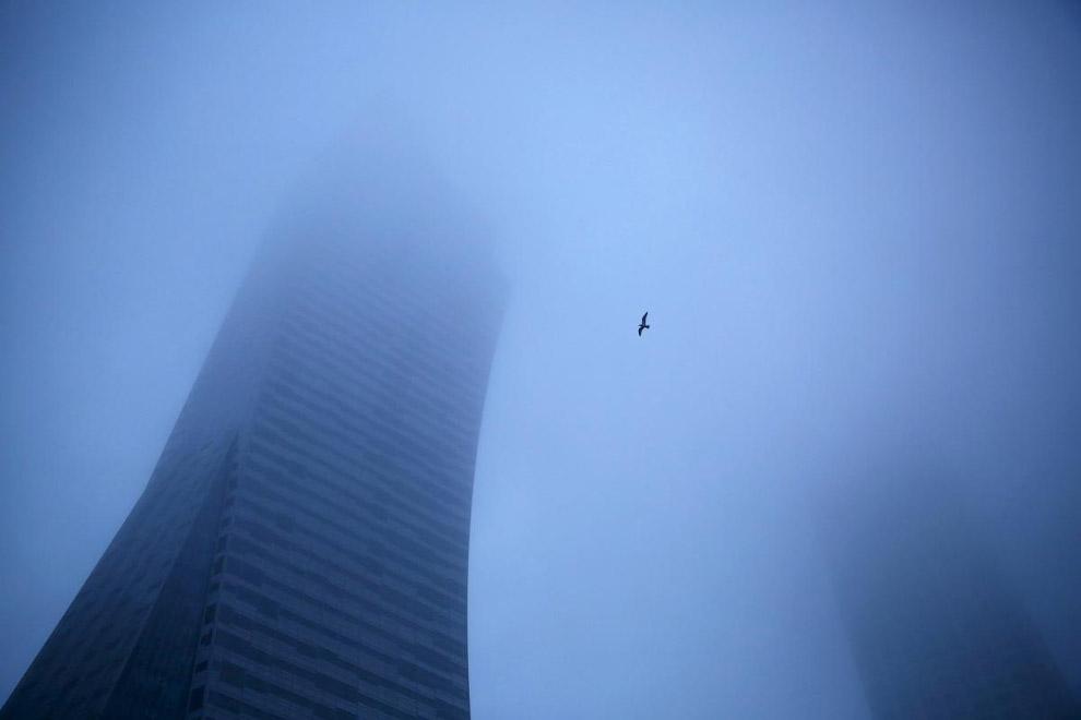 Туман и птица в небе в центре Варшавы, Польша