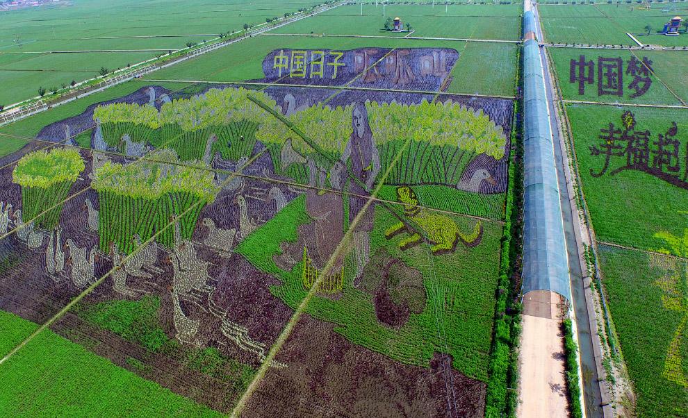 Художества на рисовом поле в Шэньяне, Китай