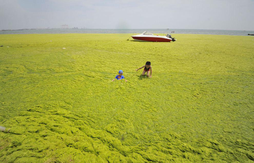 Нашествие зеленых водорослей