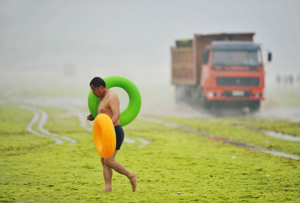Водоросли с побережья собирают и увозят грузовиками