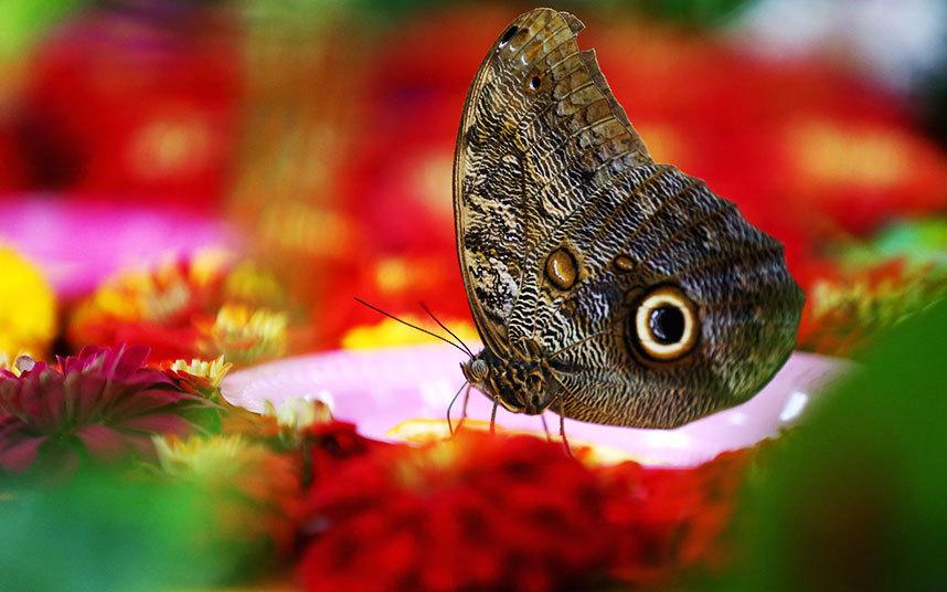 Сад бабочек в Дубае