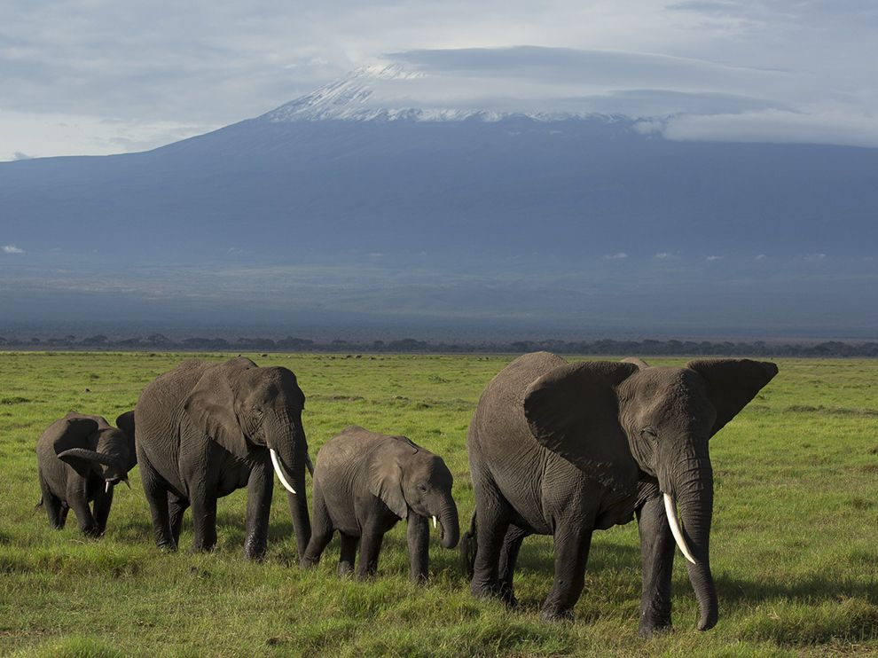Парад слонов и гора Килиманджаро