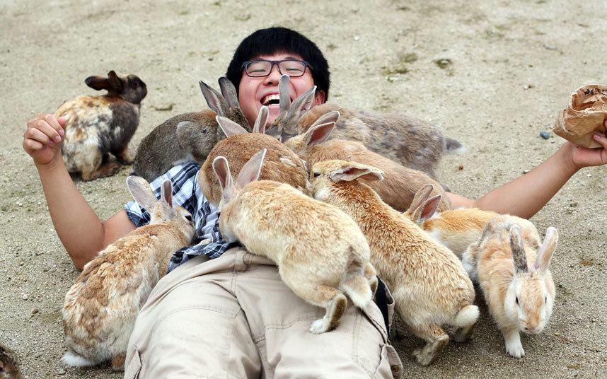 Турист на острове кроликов в Японии