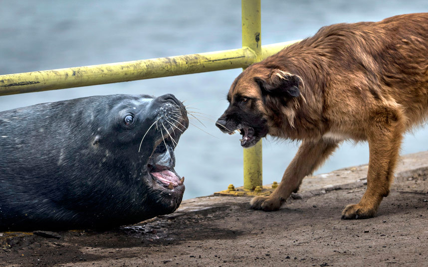 Пес и морской лев