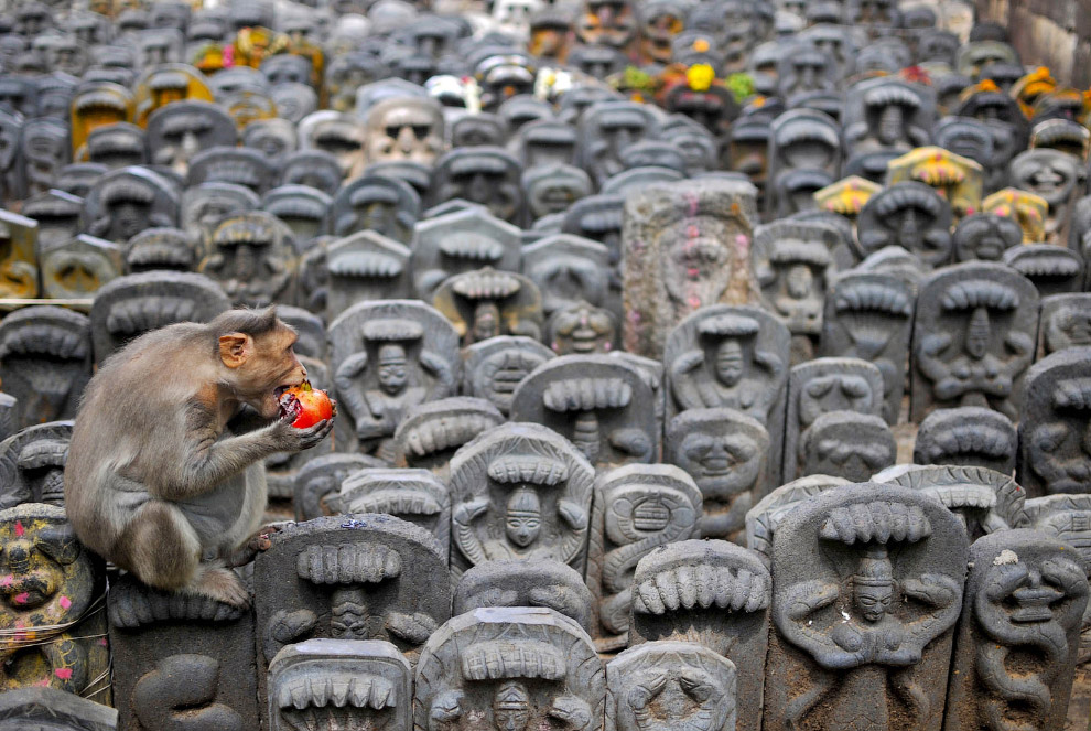 Макака внутри храма на окраине Бангалора, Индия