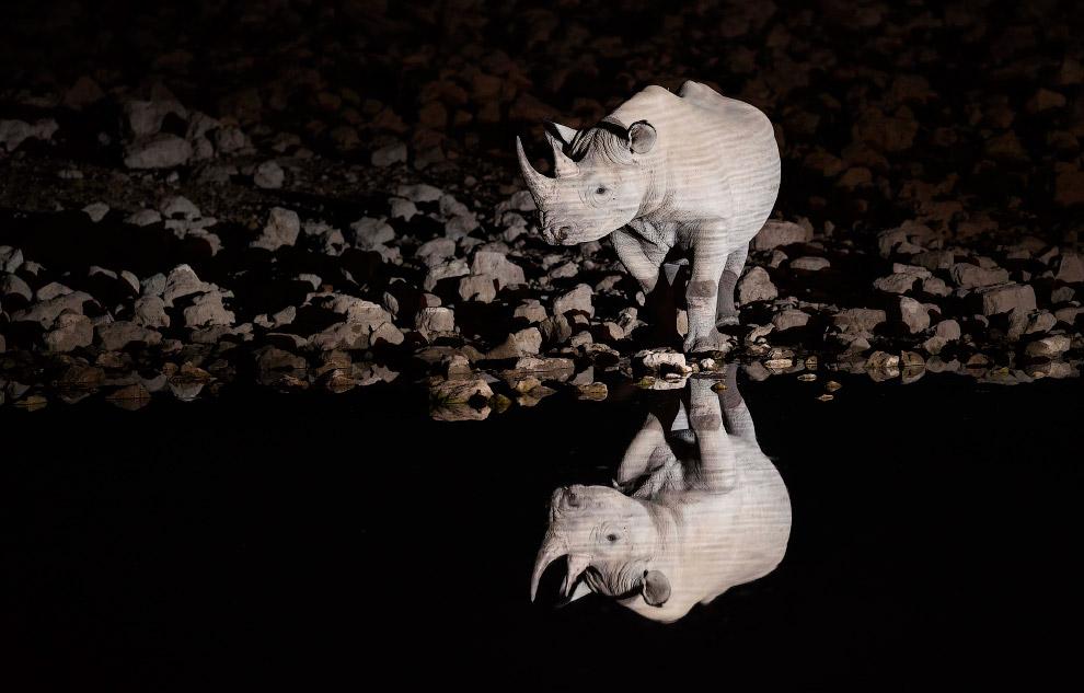 Носорог у воды