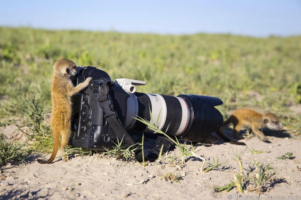 Не по размеру камера