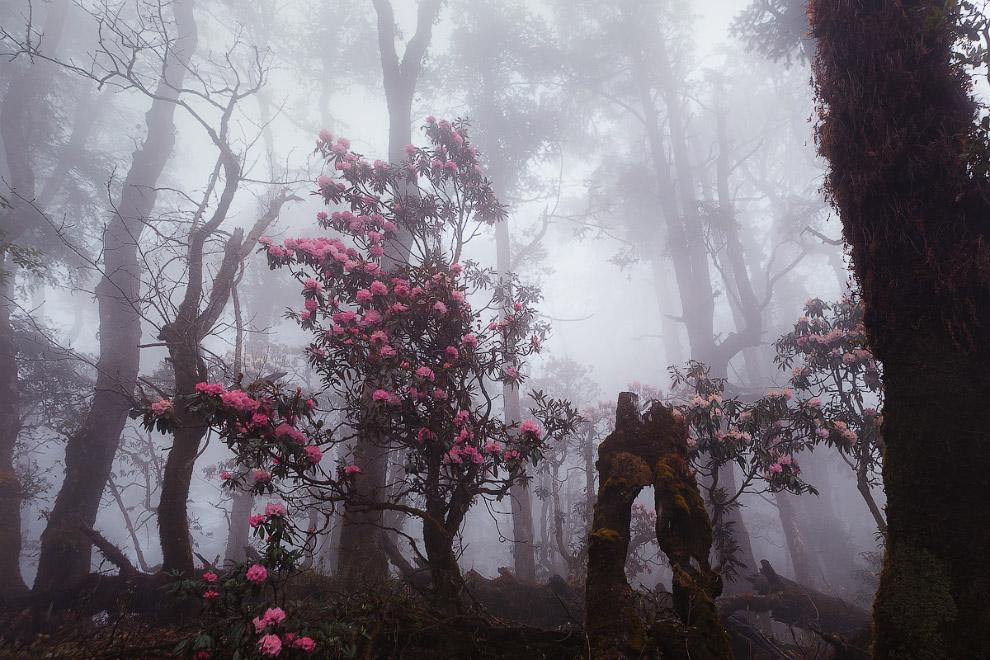 Лангтанг — территория мистических пейзажей