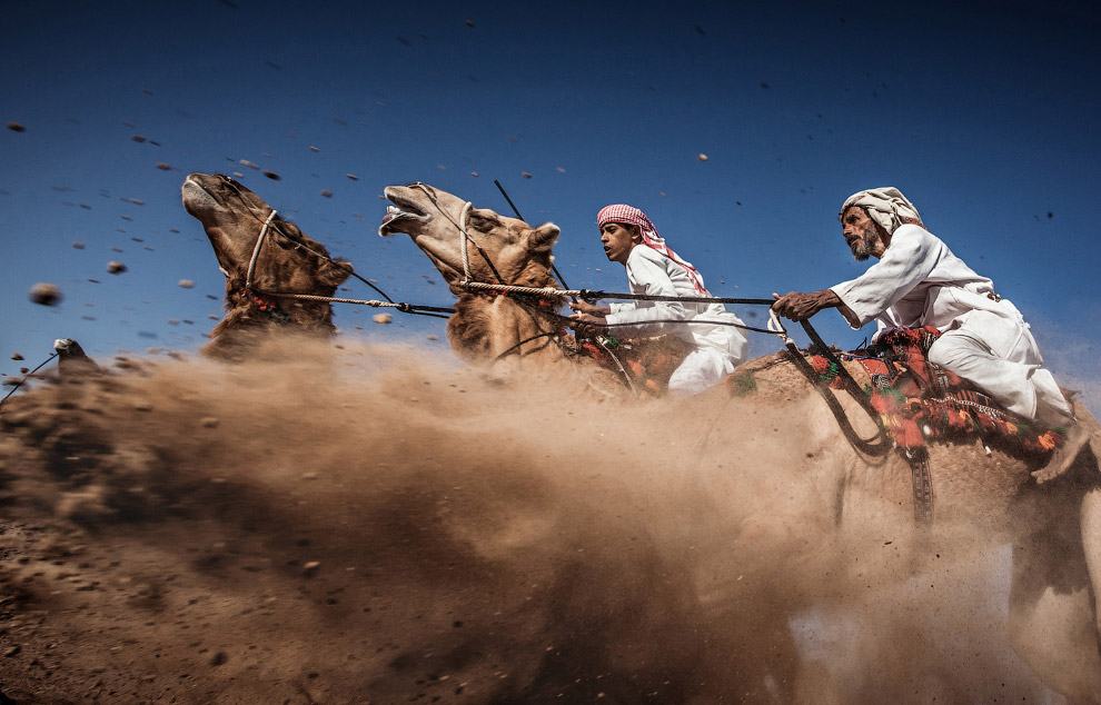 Традиционные верблюжьи бега в Омане