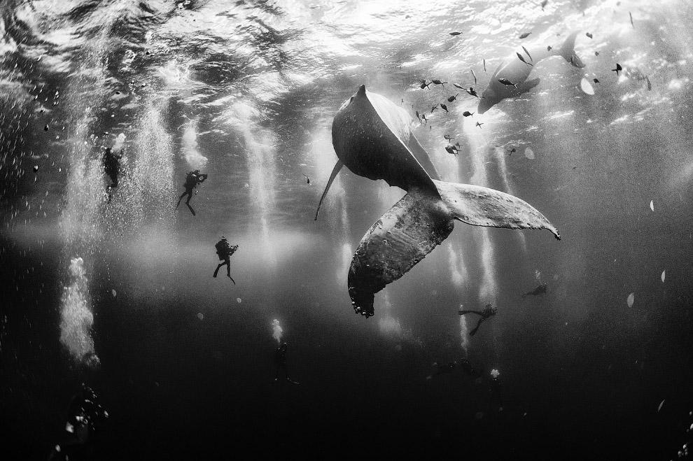 Дайвинг с горбатыми китами, Мексика