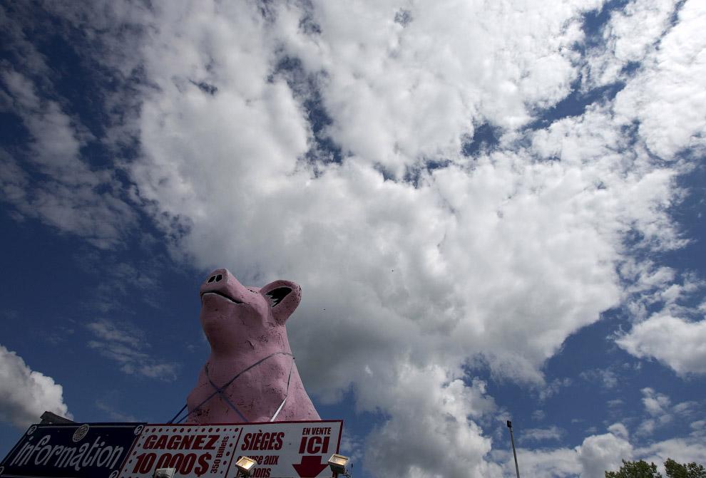 Свинский фестиваль в Квебеке, Канада