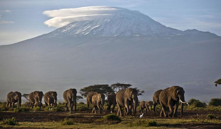 Стадо слонов в Национальном парке Амбосели, Кения
