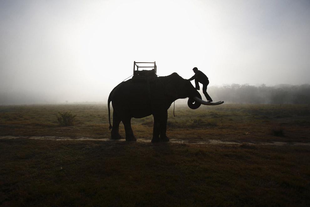 Погонщик со своим слоном рано утром в Катманду