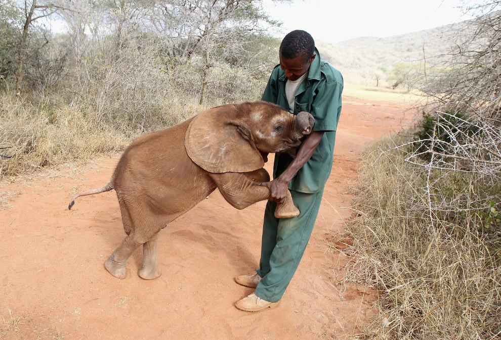 5-месячный слоненок по имени Тембо, Танзания