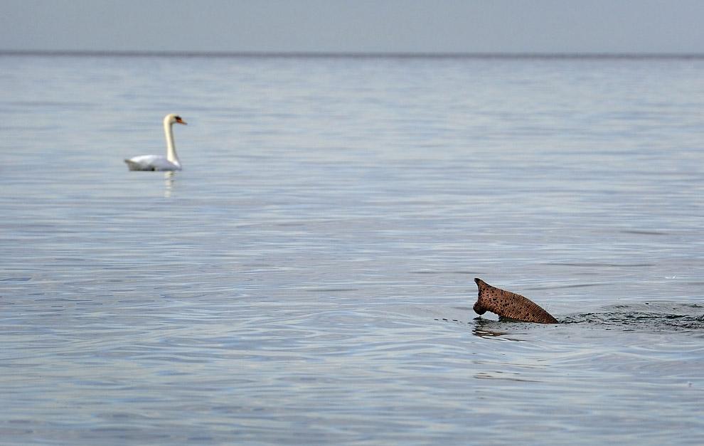 Слон-подводная лодка из цирка и лебедь