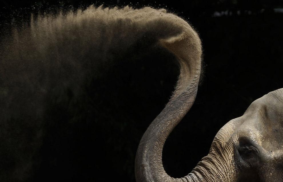 Азиатский слон принимает грязевые ванны в зоопарке в Германии
