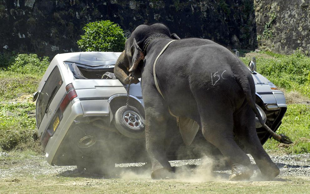 Слон вышел из себя в Шри-Ланке