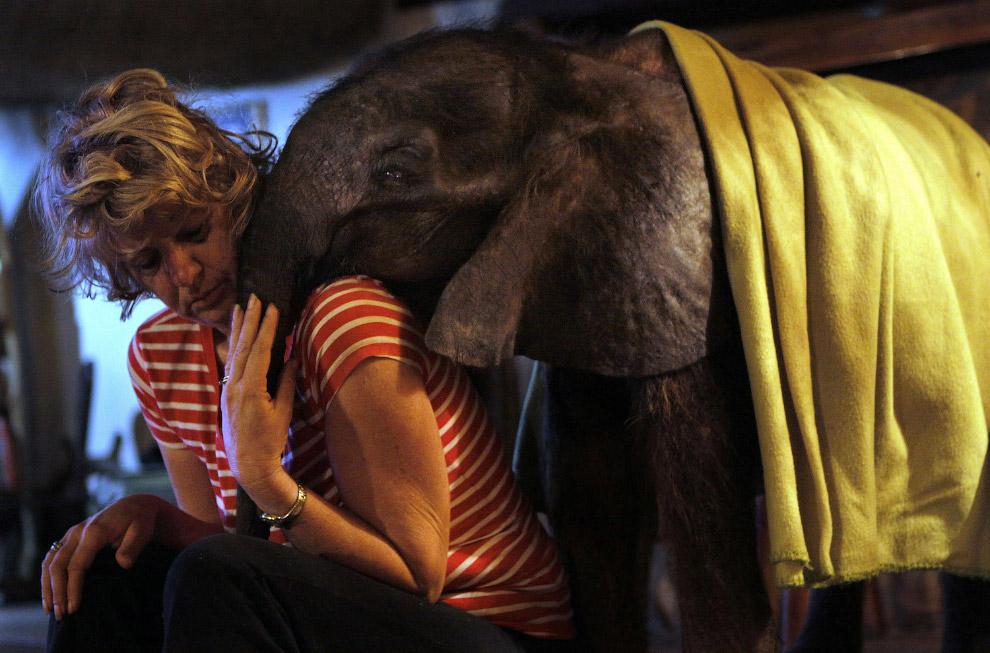 Найденный слоненок