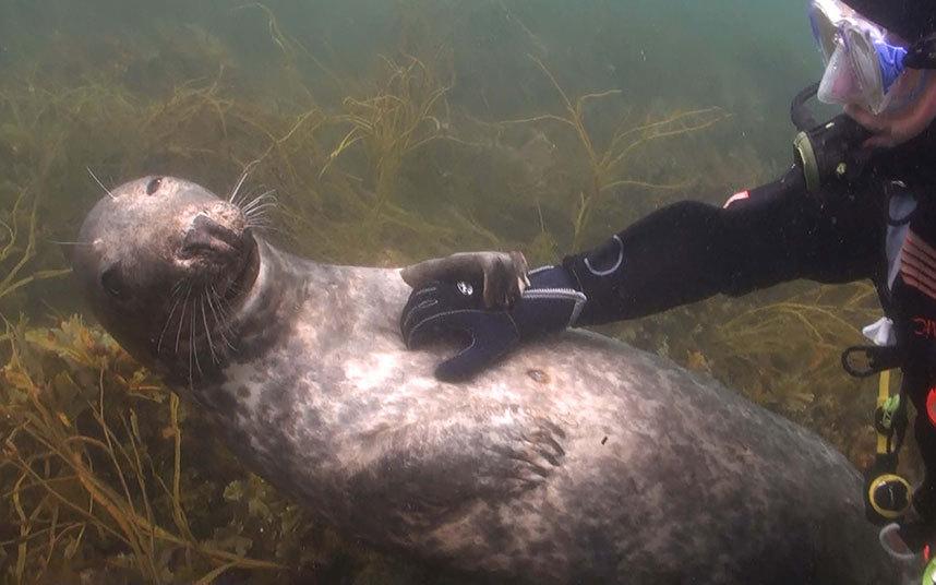 Почеши тюленя