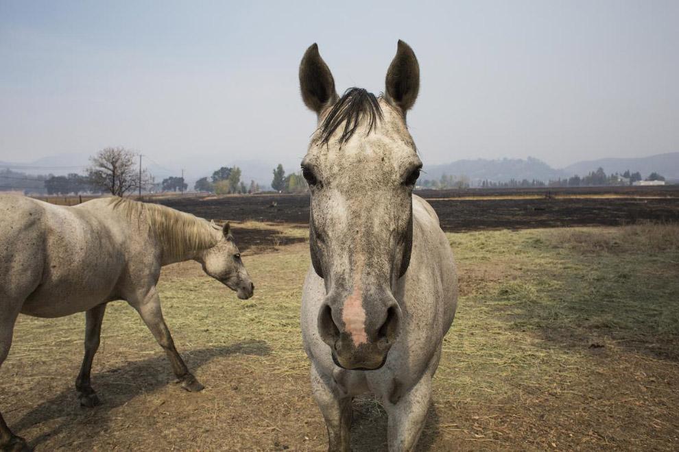 Сфотографировать коня анфас