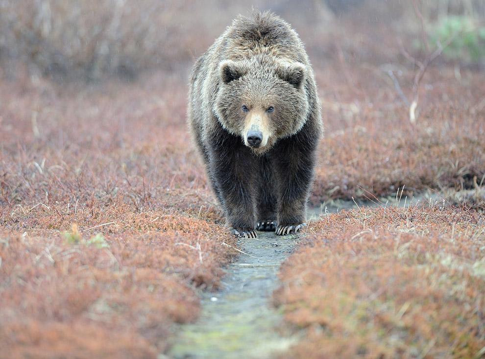 Медвежья тропа весной