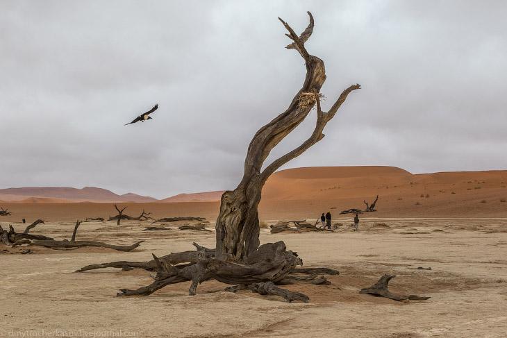 Намибия. Мёртвое болото
